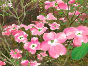 dogwood_bloomsweb2.jpg